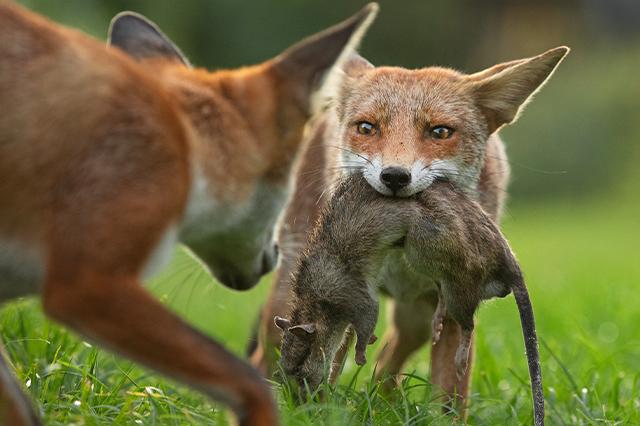 https://whereandwhenlondon.com/wp-content/uploads/2020/10/Matthew-Maran-Wildlife-Photographer-of-the-Year-2020.jpg